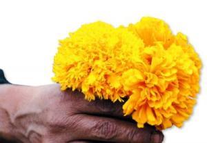listas-las-flores-para-los-muertos