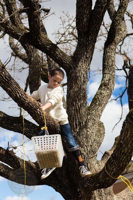 a monkey in a tree in texas