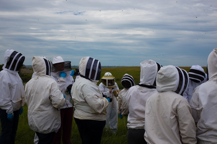 bloggers and bees