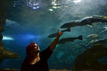 Lavorare a Bilbao-Acquario San Sebastian-aspassoperlaspagna