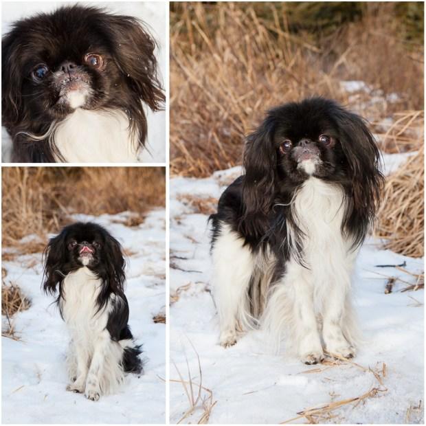Anchorage Alaska Pet Photography 6