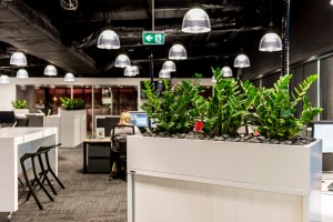 open plan office, biophillia, plants in office design