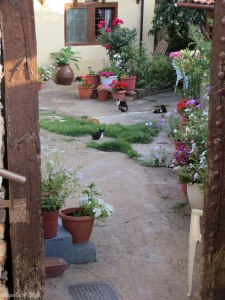 cats in Siatista, Macedonia, Greece