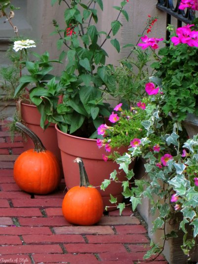 pumpkins and flowers on Commonwealth Avenue, Back Bay, Boston