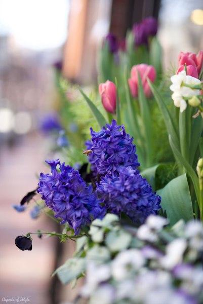 flowers in Beacon Hill