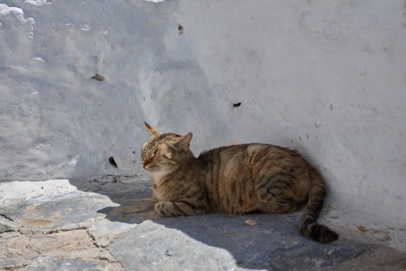 cat in Chozoviotissa monastery, Amorgos Greece