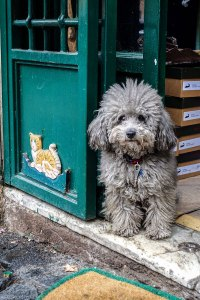 dog in Trastevere, Rome