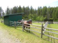 Safe roomy paddocks at Aspengrove Country Resort Bales and Breakfast Vernon BC