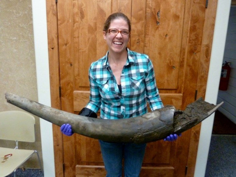An employee of the Snowmass Water and Sanitation District with an ancient tusk, shortly after it had been dug out of the ground by construction workers.
