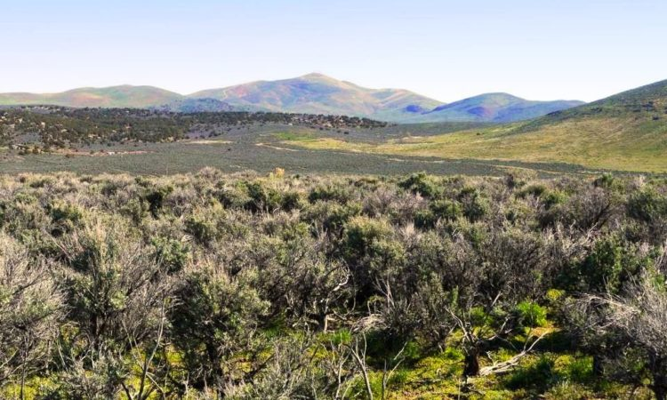 Picts-Last-Chance-Ranch-2.27-Acres-5-750x450