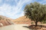 Macan_Marokko_24