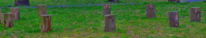 A circle of tree stumps