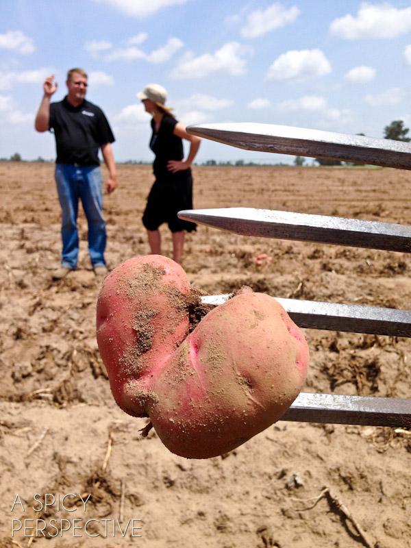 I *heart* potatoes