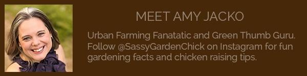 Meet Amy Jacko