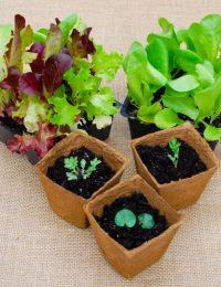 Easy Gardening 101: Starting Seeds Indoors #gardening #garden #seeds #DIY