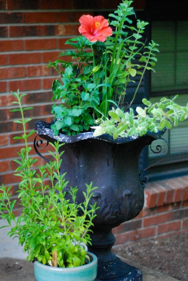 How to Plant a Tea Garden #gardening #teagarden #tea