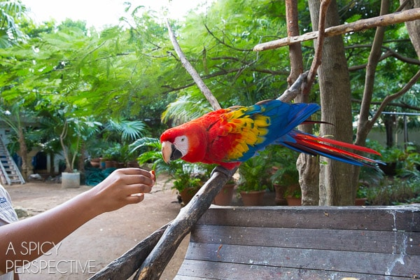 Are All Inclusive Resorts for You? (Animal Explorer Program)