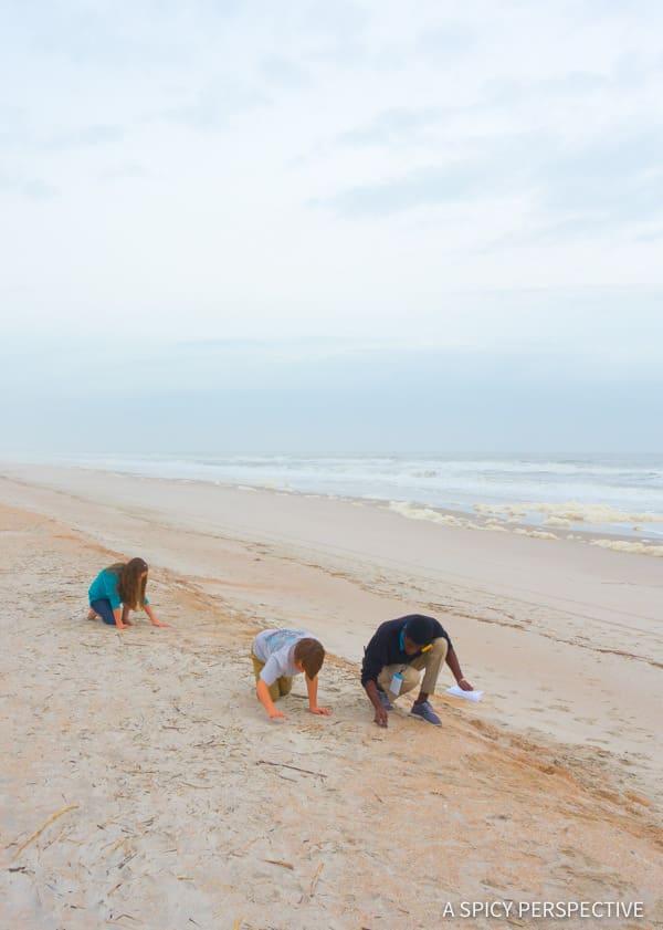 Shark Tooth Hunt - Amelia Island, Florida Travel Planning Tips   ASpicyPerspective.com