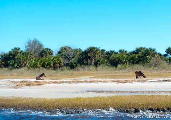 River Cruise - Visit Amelia Island, Florida   ASpicyPerspective.com