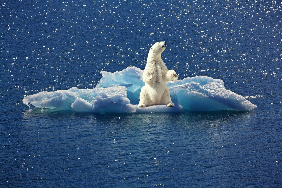 A polar bear on a broken block of ice