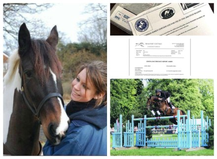 Breeding my little horse of a lifetime. Part 1: Choosing the stallion, measuring follicles and hoping for a heartbeat