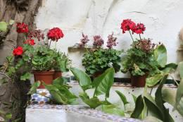 Garden in Córdoba, Spain