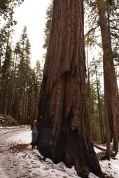Huge tree, tiny me...