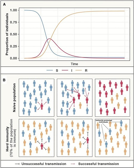 Analysing and Interpreting the Concept and Possible Implementation of Herd Immunity in the Human Population against COVID 19 Infections