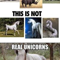 Real Unicorns Have Curves !