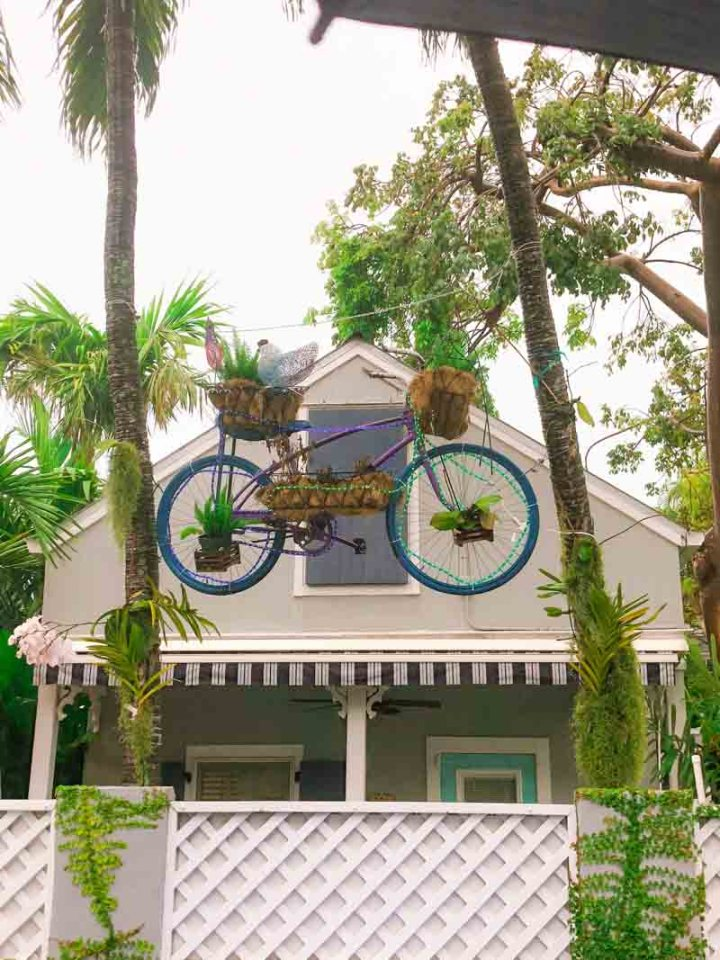 Cute bicycle planter in the air
