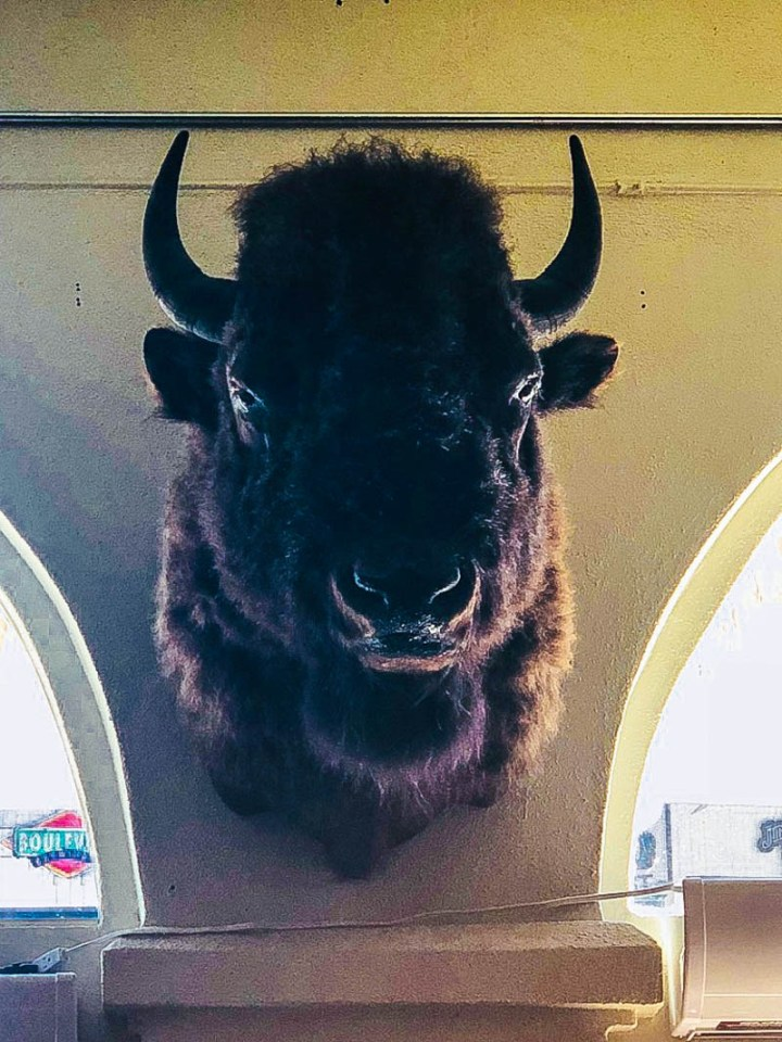 Bison head on wall in Duval Central bar