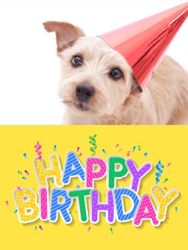 Dog Happy Birthday Cards Birthday Greeting Cards By Davia Free Ecards