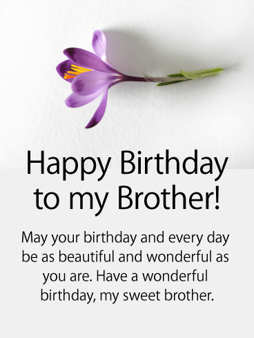 Purple Flower Happy Birthday Card For Brother Birthday Greeting Cards By Davia