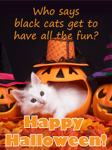 Image result for happy halloween cat images