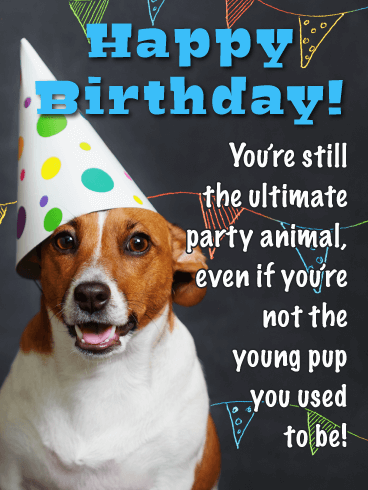 To The Ultimate Party Animal Funny Birthday Card For Him Birthday Greeting Cards By Davia