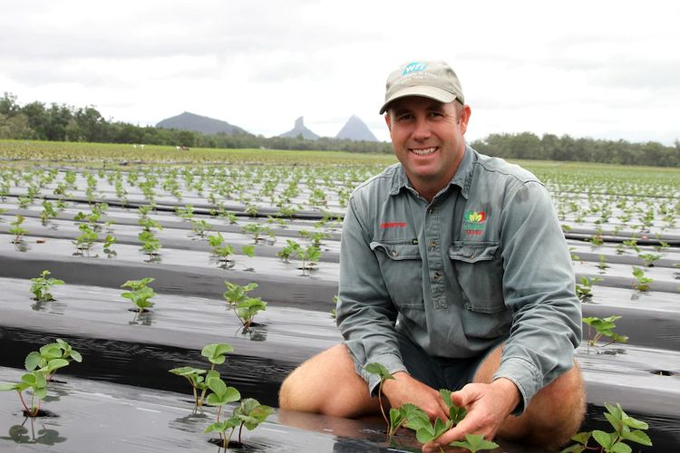 Strawberry farmer Brendan Hoyle said he is planting less this year because of concerns there are not enough workers to harvest the crop.