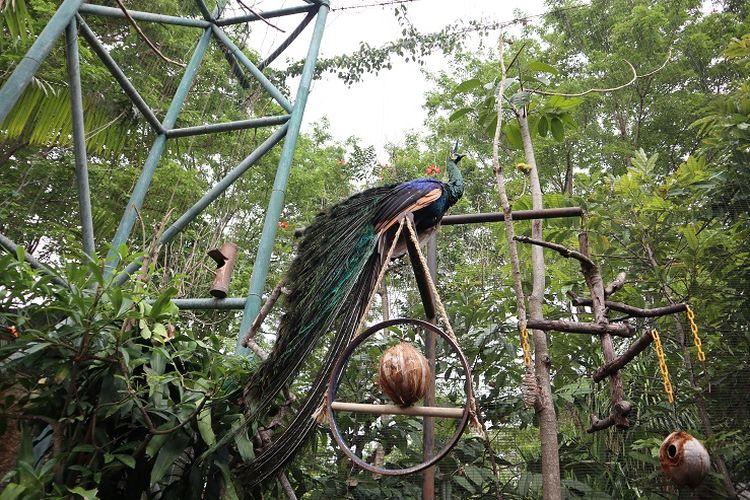 Salah satu satwa di Kebun Binatang Gembira Loka, Yogyakarta.