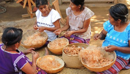 The San Juan Colorado women cleaning brown cotton (coyuche) in preparation for spinning and weaving.