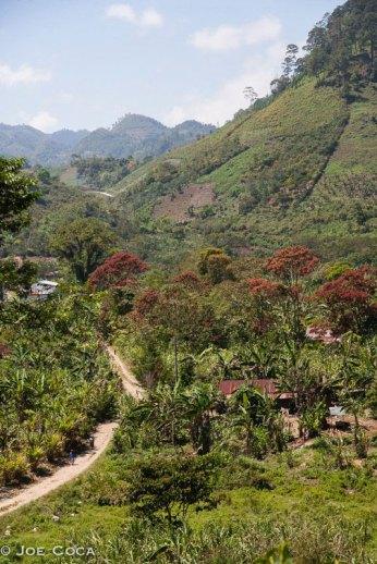 Altaverapaz region of Guatemala.
