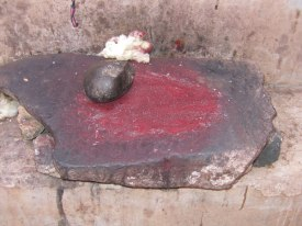 The dried cochineal bug is ground into powder and ready for dyeing.