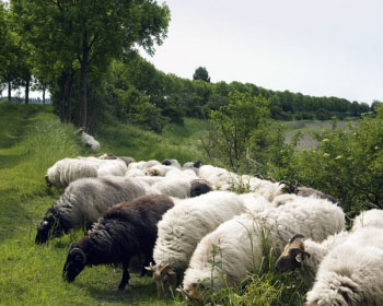 Sheep shape: Edelkoort predicts handknits and rugged wools will be in style. We knew that!