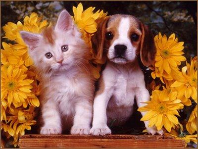 Animalutele de casa, motiv de fericire si izvor de sanatate!