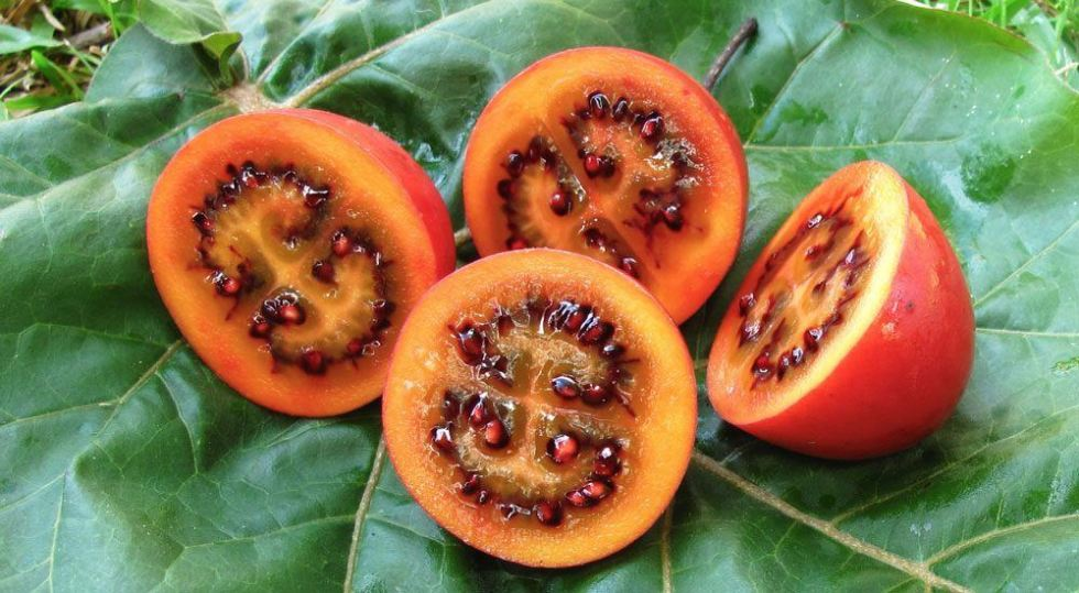 Kings, https://www.kings.co.nz/gardening-news/october-plant-of-the-month-tamarillo