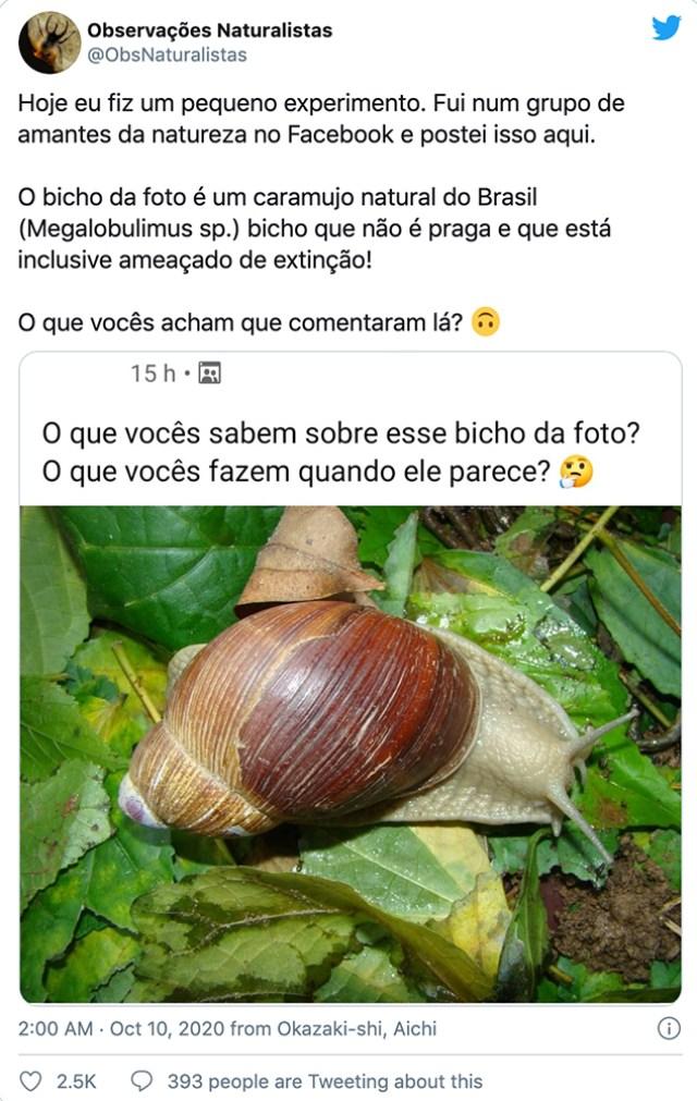 Twitter/@ObsNaturalistas, https://twitter.com/ObsNaturalistas/status/1314792945153843200?s=20