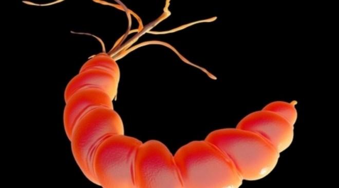 كيفية علاج جرثومة المعدةوطريقة التشخيص والأعراض