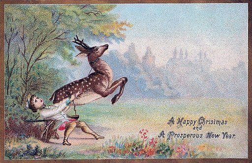 Nova Scotia Deer