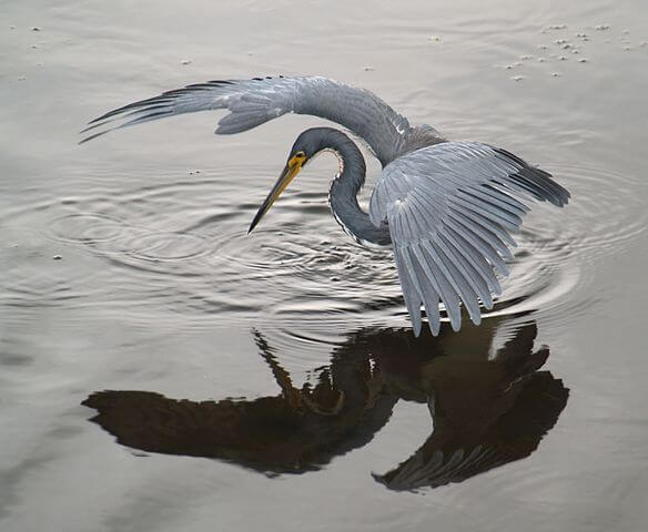 Monday or Tuesday heron