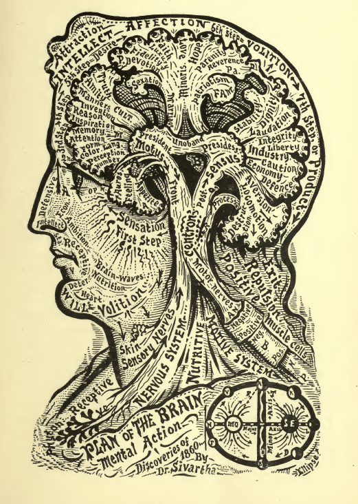 Plan of the Brain
