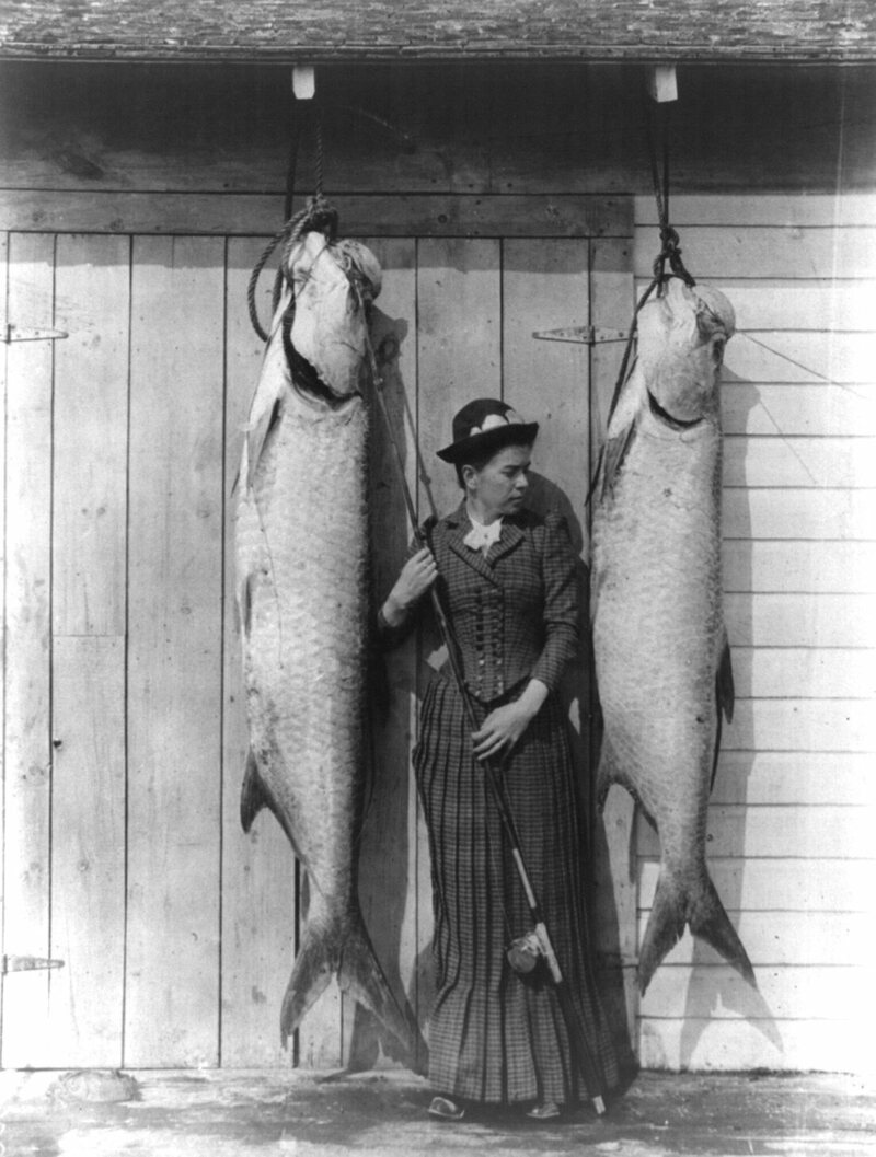 Tarpon caught by Mrs. Charles E. Allen of Glasgow, Scotland, at St. James City, Florida, in the late 1880s or early 1890s.
