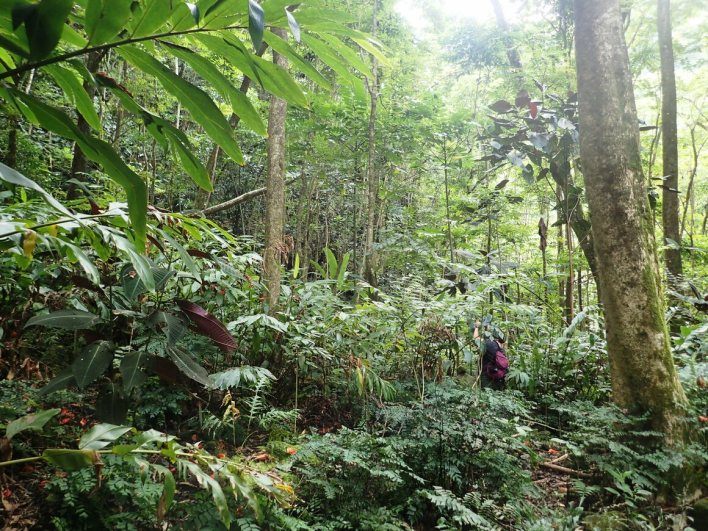 Evolutionary biologist Cindy Bick and her team spent hours looking for snails in the dense Tahitian forest.